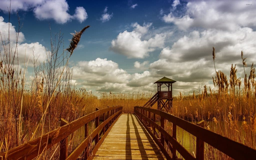 wooden-bridge-across-the-river-towards-the-reed-51749-2560x1600